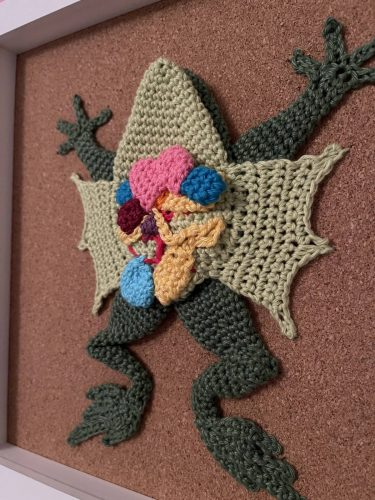 Amigurumi Dissection Frog Crochet Pattern Review by Melissa Phillips for Cottontail & Whiskers