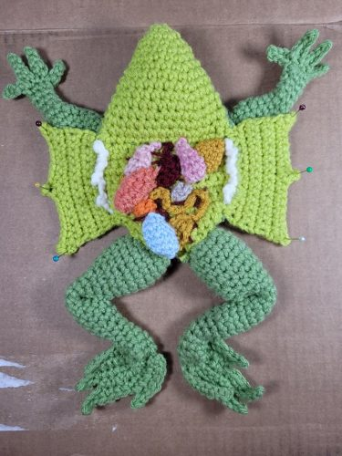 Crochet Frog Dissection Amigurumi Pattern Review by Carolane Baribeau for Cottontail and Whiskers